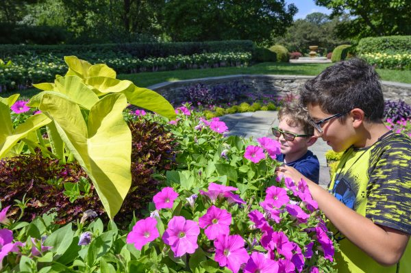 Spring Flower Photography at Kingwood Center Gardens