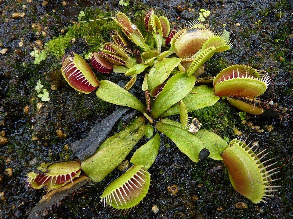 Storytime Series- Strange Plants