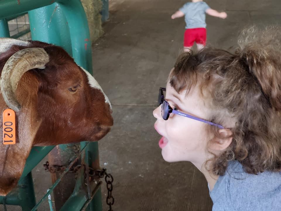 Family Fun on the Farm