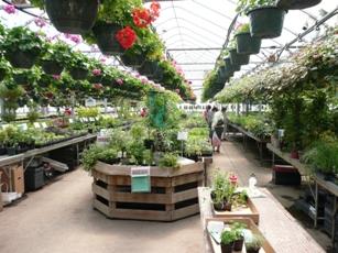 Alta Greenhouse